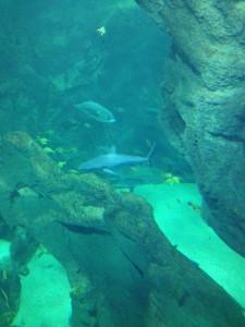 aquarieum de la rochelle
