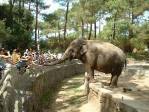zoo-de-la-palmyre-la-palmyre-Royan-gîte